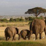 Een safari Tanzania boeken