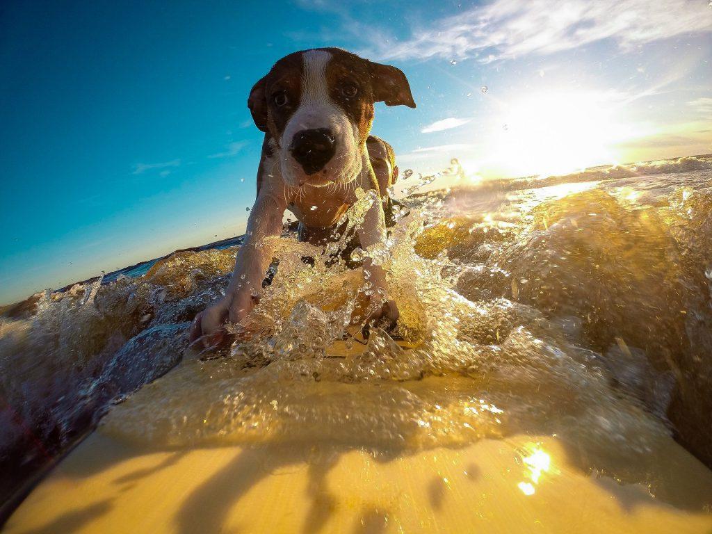 Met de hond op vakantie? Lees deze tips!