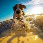 De hond mee op vakantie? Lees deze tips!